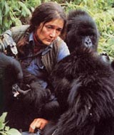 Dian Fossey with her  Rwanda Mountain Gorillas